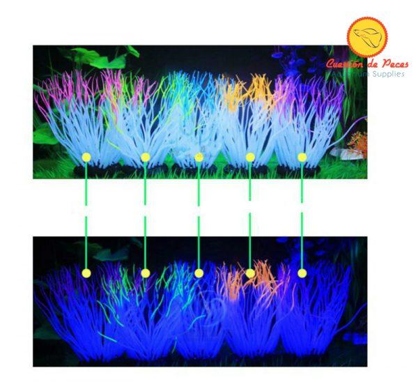 Anemona Silicona Fluorescente Hermosa!